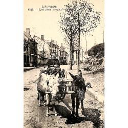 ABAO 63 - Puy-de-Dôme [63] Auvergne - Les Purs sangs du pays.