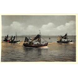 Flandre occidentale Zeebruges - Retour de pêche.