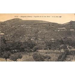 ABAO 69 - Rhône [69] Ampuis - Vignobles de la Côte Rôtie.