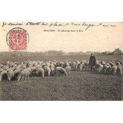 ABAO 50 - Manche [50] Beauvoir - Un pâturage dans la Brie.