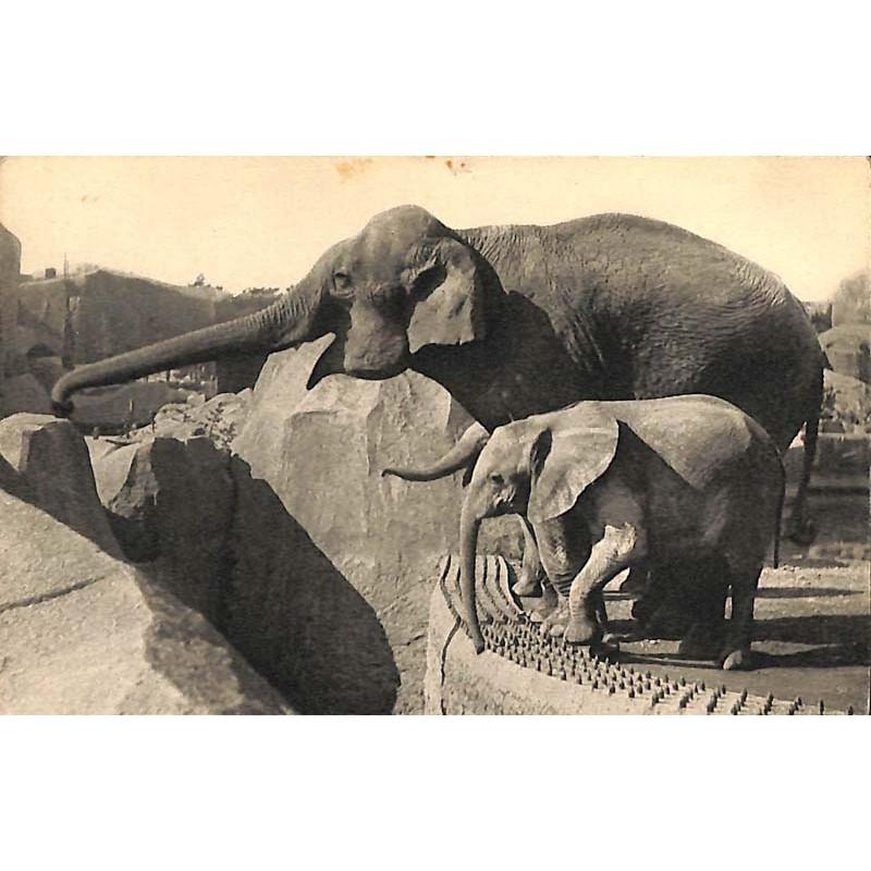 ABAO 75 - Paris [75] Paris 12 - Parc zoologique du bois de Vincennes. Un éléphant d'Asie femelle et Micheline, jeune éléphant...