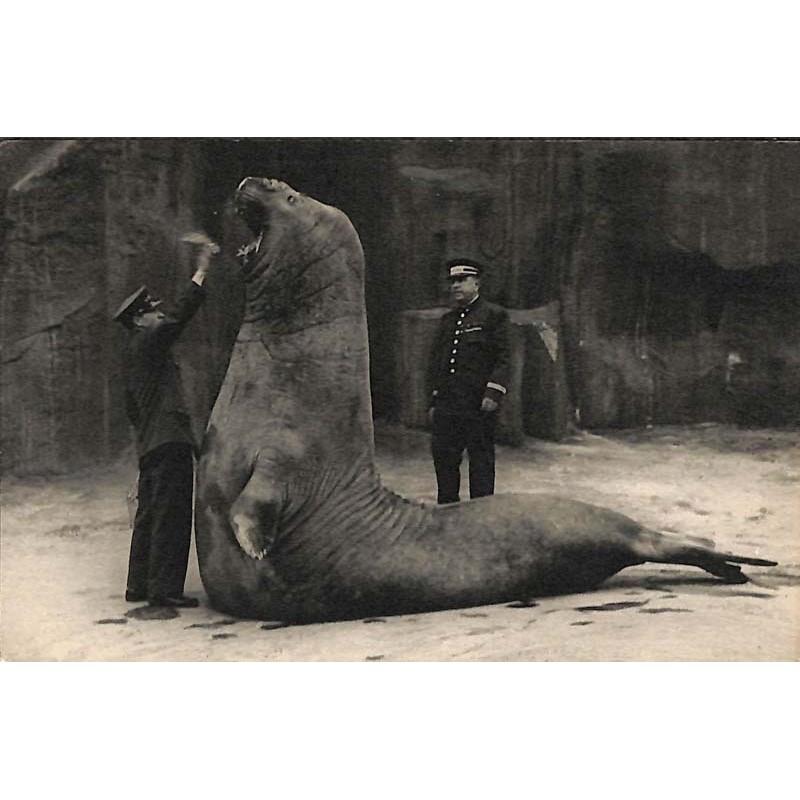 ABAO 75 - Paris [75] Paris 12 - Parc zoologique du bois de Vincennes. Le Repas de l'éléphant de mer.