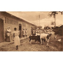 Congo Kimwenza - La Ferme.