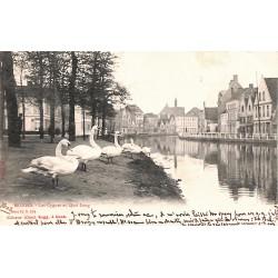 Flandre occidentale Bruges - Les Cygnes au Quai Long.
