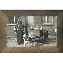 ABAO Flandre orientale Gand - Attelage à chien. - Carte-album.